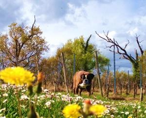 Eco chien concours photo mai 2016