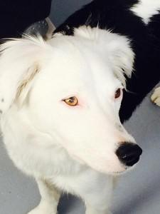 eden chien concours photo mai 2016