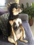 Kira chien concours photo mai 2016