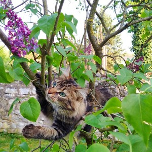 Lily chat concours photo mai 2016