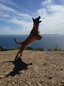 Lista chien concours photo mai 2016