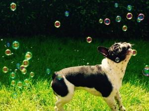 Louscar chien concours photo mai 2016