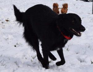 black chien concours photo juin 2016