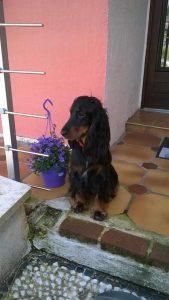 Loca chien concours photo juin 2016