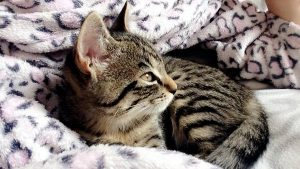 Missy chaton concours-photo-animaux chatons chiots juin 2016