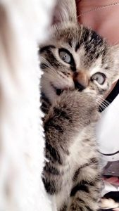 missy chaton concours photo animaux chatons chiots juin 2016