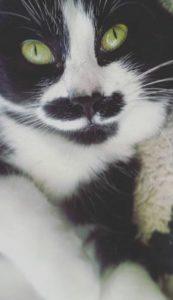 Moustache chat concours photo juin 2016