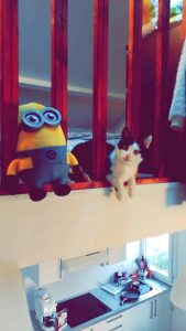 Neymar chaton concours photo-animaux chatons chiots juin 2016