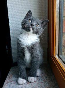 Nino chaton concours photo animaux chatons chiots juin 2016