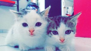 Shayna et Cayla chatons-concours-photo-animaux chatons chiots juin 2016