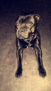 Tyson chien concours photo juin 2016