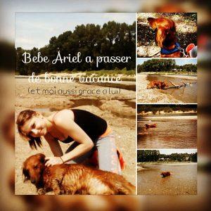 ariel chien concours photo animal vacances aout 2016