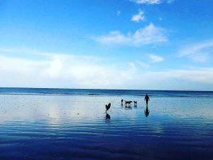 Chipie chien concours photo-animal vacances juillet 2016