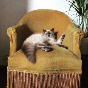 Django chat concours photo juillet 2016