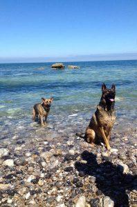 Gara et ilton concours photo animaux juillet 2016