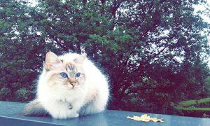 Juliette-chat concours photo animaux juillet 2016