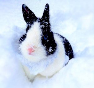 Keneo lapin concours photo animaux juillet 2016