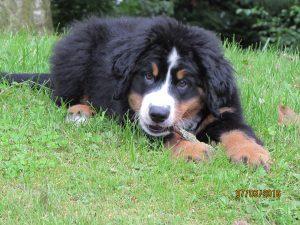 Ruben chien concours photo juillet 2016