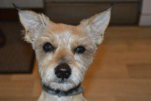 Wi-Fi chien concours photo animaux juillet 2016