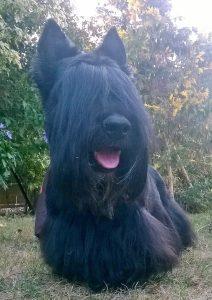Boris chien concours photo animaux aout 2016