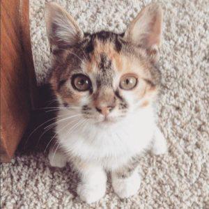 Kaleesi chaton concours photo aout 2016