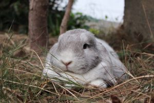 maléa lapin concours photo animaux aout 2016