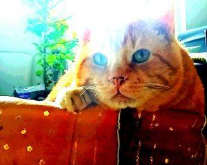 doudou chat concours photo animaux septembre 2016