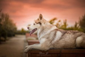 ishka chien concours photo animaux septembre 2016