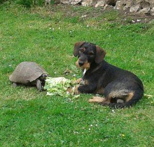 junior chien concours photo animaux septembre 2016