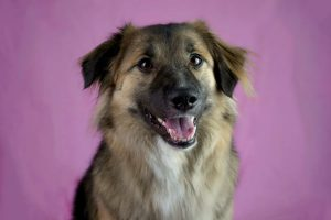 alba chien concours photo animaux octobre 2016