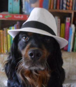 cali chien concours photo animaux octobre 2016