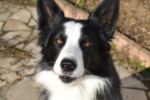 jag chien concours photo animaux octobre 2016