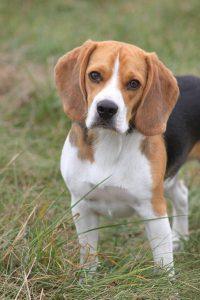 jecko chien concours photo animaux octobre 2016