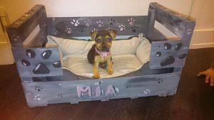 mia chien concours photo animaux octobre 2016