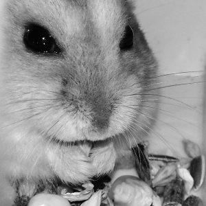 blanco rongeur concours photo animaux novembre 2016