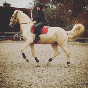 farah diba cheval concours photo animaux novembre 2016