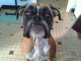 fiesta chien concours photo animaux novembre 2016
