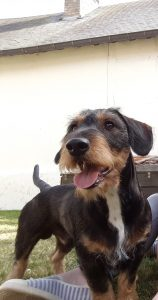 junior chien concours -photo animaux novembre 2016