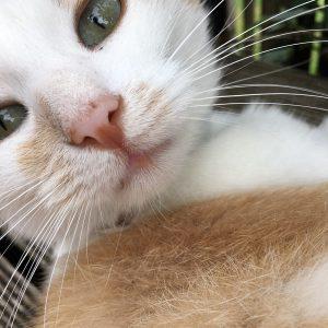 kikito chat concours photo animaux novembre 2016