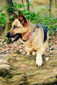 kyo chien concours photo animaux novembre 2016