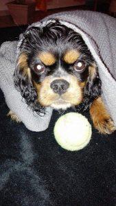 lexi chien concours photo animaux novembre 2016