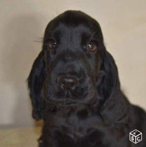 mango chien concours photo animaux novembre 2016