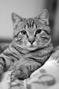 mojito chat concours photo animaux novembre 2016