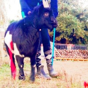 pepito concours photo animaux novembre 2016