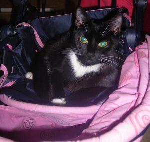 princesse chat concours photo animaux novembre 2016