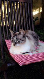 pupuce chat concours photo animaux novembre 2016