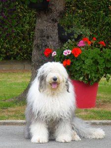 ziva chien concours photo animaux novembre 2016