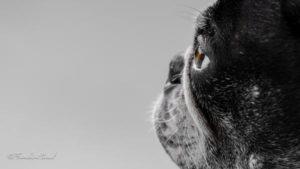 darwin boston chien concours-photo animaux decembre 2016