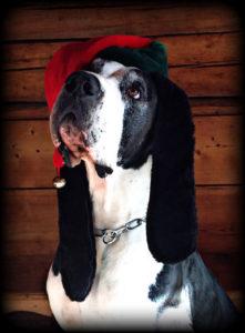 ivory chien concours photo animaux decembre 2016