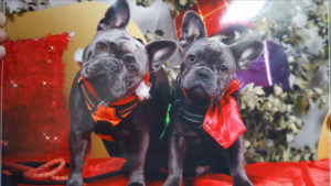 lolita marley chiens concours-photo animaux decembre 2016